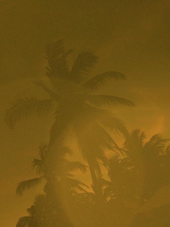 Palms Photograph - Tulum Palm #2, 20 by Chris Hunt