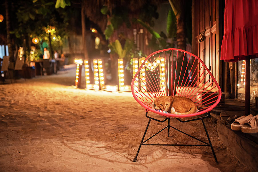 Tulum Sleepy Orange Cat Tulum Mexico MX by Toby McGuire