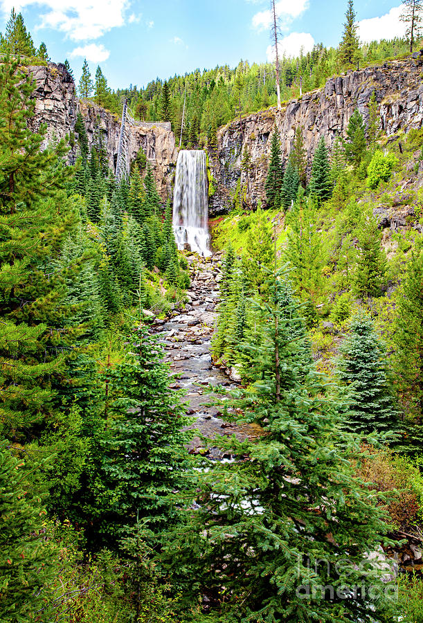 Tumalo Falls, Art, Pine Trees, Oregon, Bend, Wall Art, Framed Art Prints Landscapes, by David Millenheft
