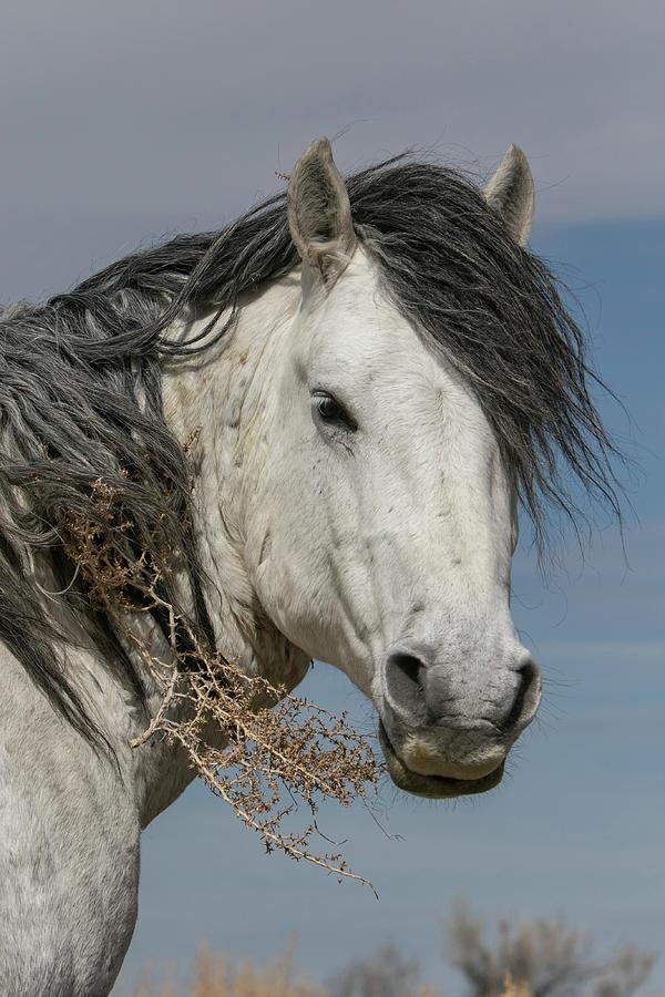 Tumbleweed Stallion by Kent Keller