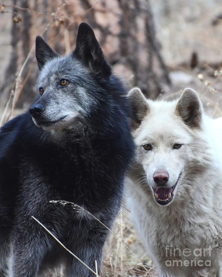 Tundra and Trigger by Robert Buderman