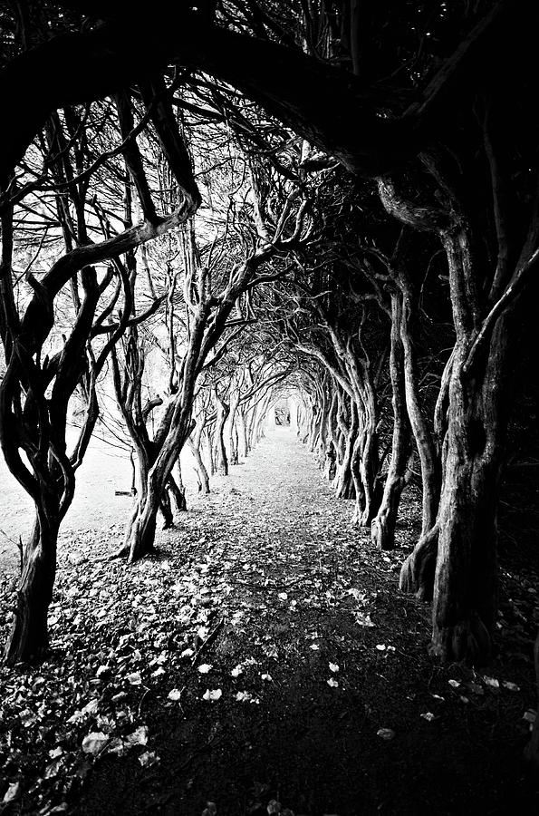 Tunnel Of Trees Photograph by Michelle Mcmahon