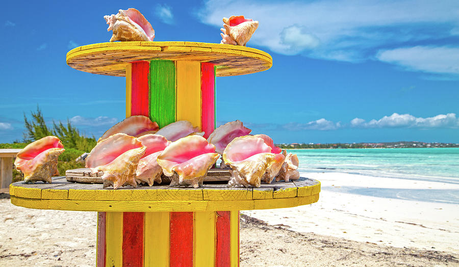 Conch Photograph - Turks And Caicos Conchs On A Spool by Betsy Knapp