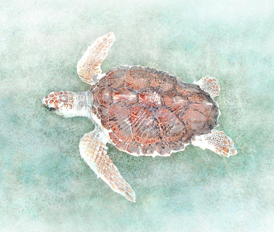 Turtle 2 by Lucie Dumas