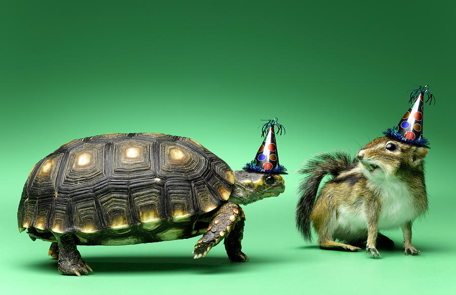 Turtle And Chipmunk Wearing Party Hats Photograph by Jeffrey Hamilton