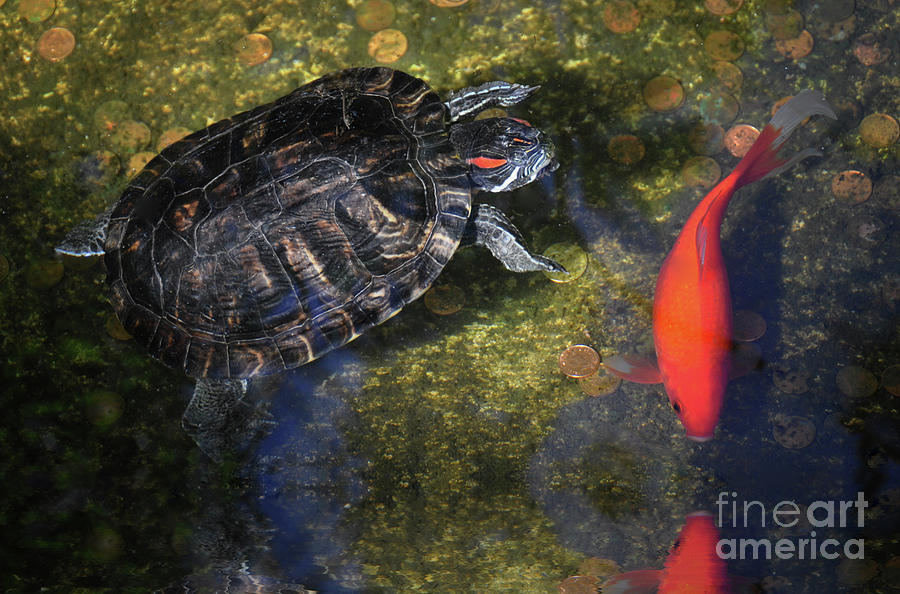 Turtle and Koi  by Elaine Manley