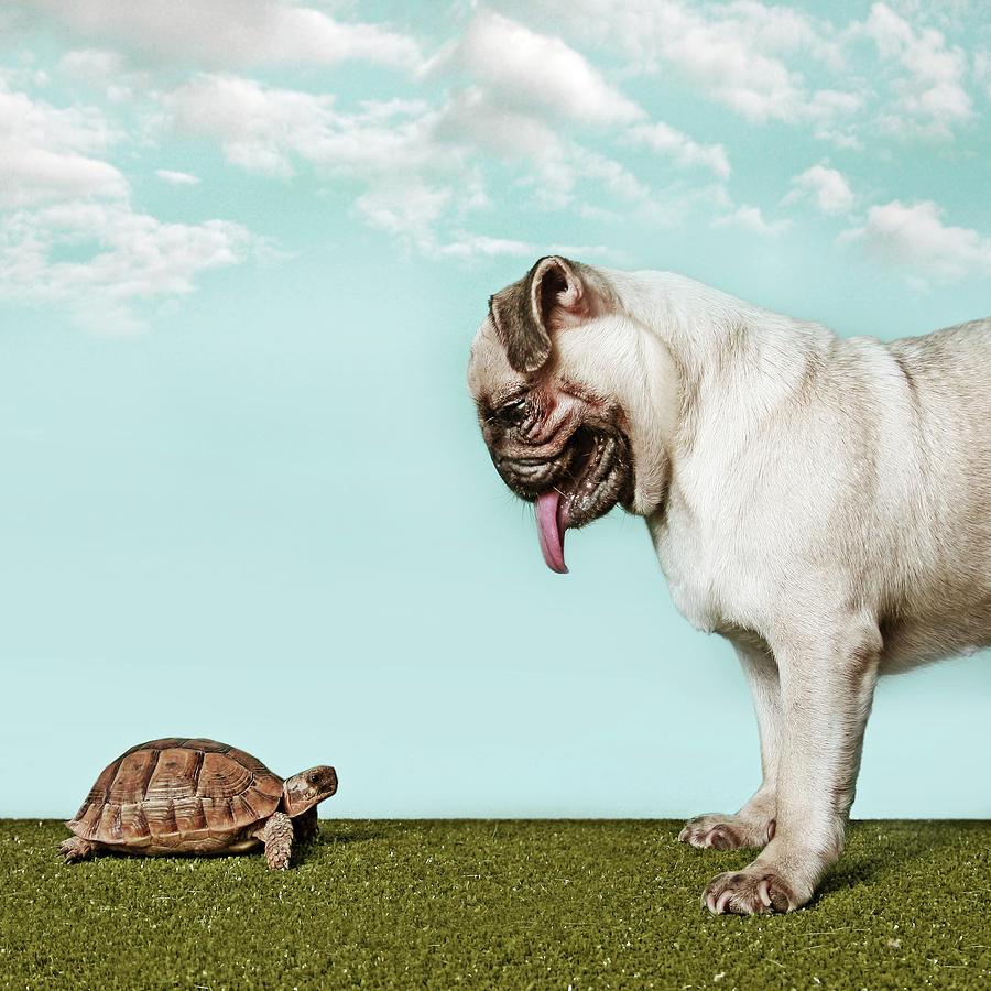 Turtle And Pug Photograph by Retales Botijero