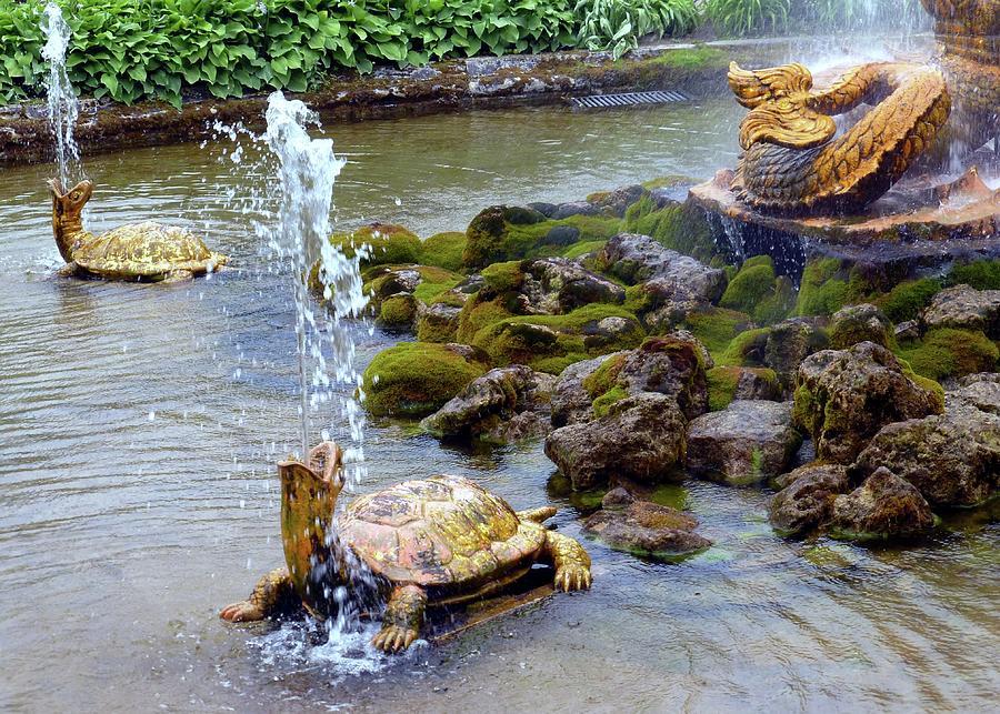 Turtle Fountains by Barbie Corbett-Newmin