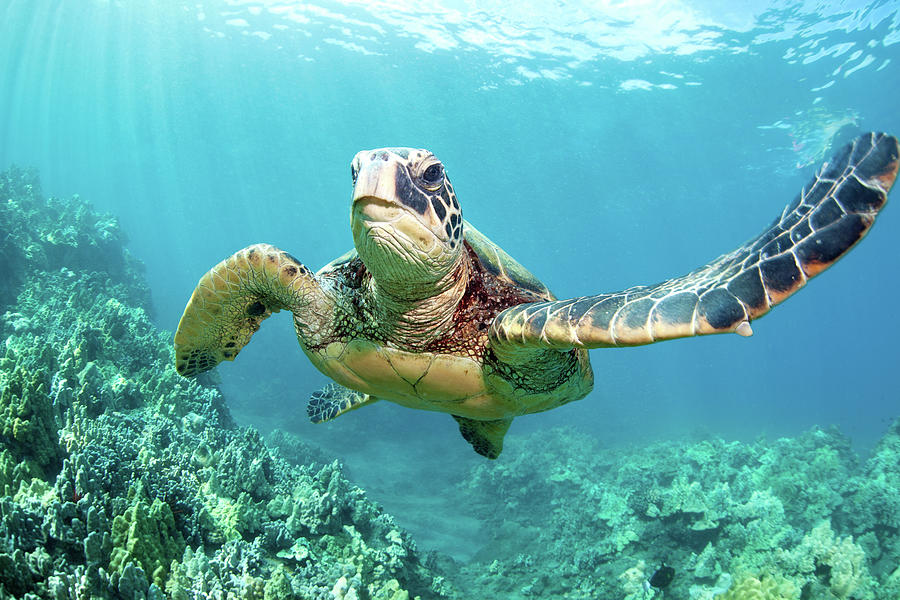 Turtle Photograph by M Swiet Productions