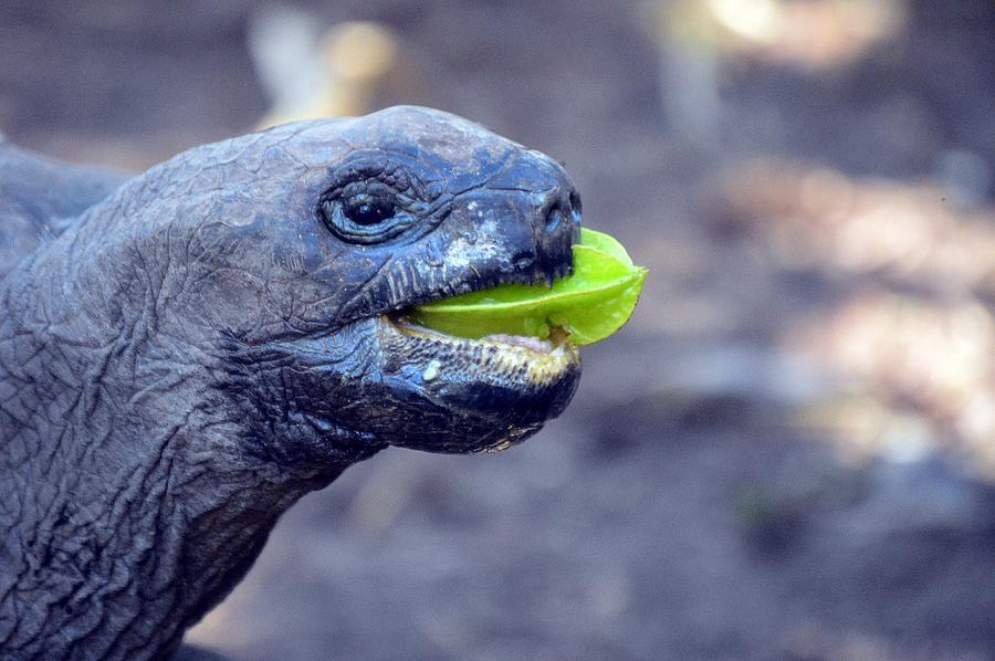 Turtle by Thomas Schroeder