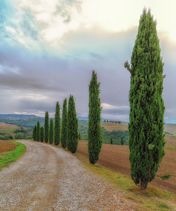 Tuscan Country Road by Lev Kaytsner