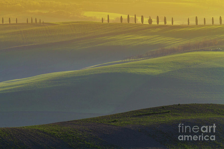 Tuscan Hilly Scenery with Cypress Trees by Heiko Koehrer-Wagner