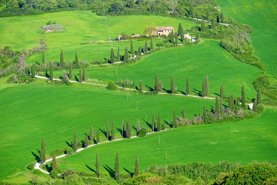 Italian Photograph - Tuscan Landscape Winding Road Lined With Cypress Trees, Val Dorcia, T by Cavan Images