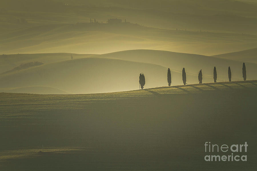 Tuscan Scenery With Cypress Trees Photograph