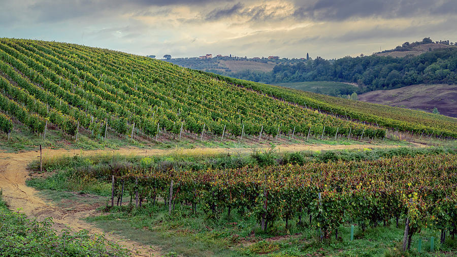 Tuscan Vineyard Early Morning by Joan Carroll