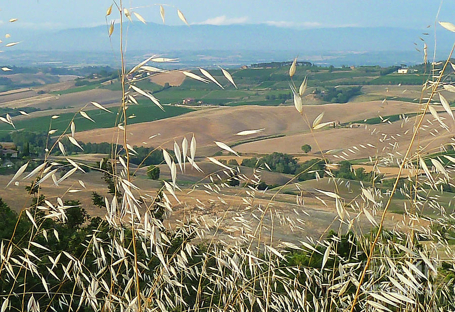 Tuscany Countryside Photograph