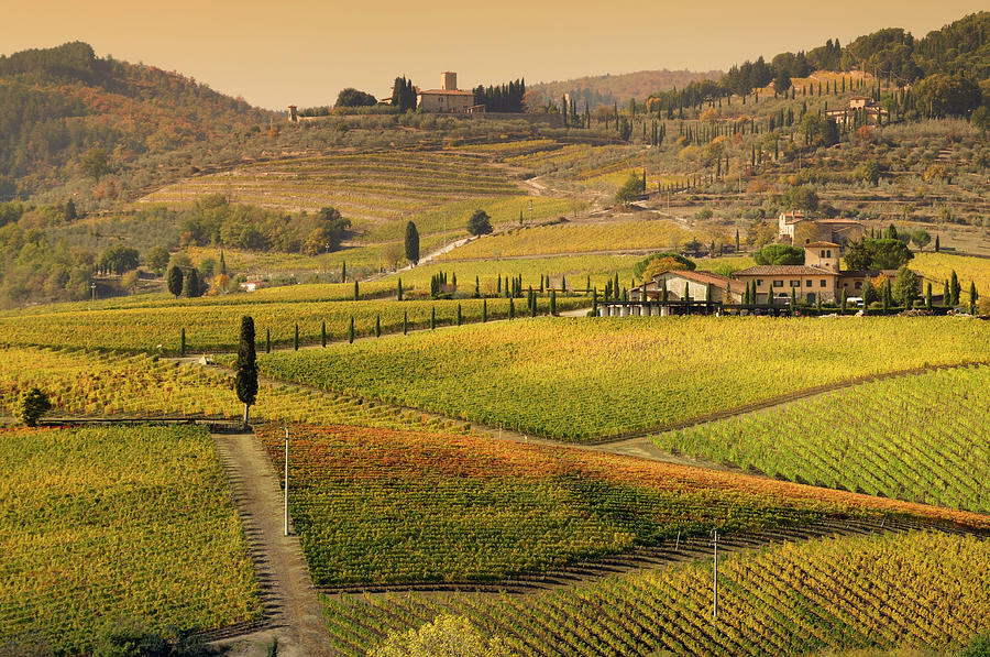 Tuscany Farmhouse And Vineyard In Fall Photograph by Lisa-blue