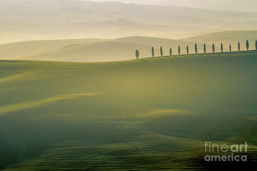 Tuscany Landscape with Cypress Trees by Heiko Koehrer-Wagner