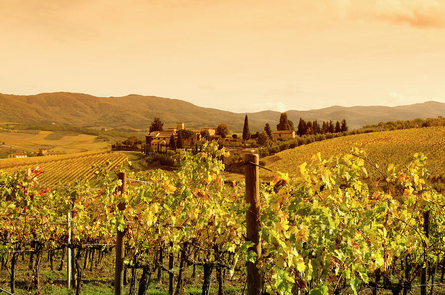 Tuscany Village And Vineyard In Fall At Photograph by Lisa-blue