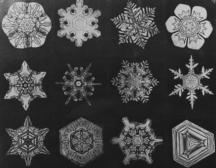 Twelve Snow Crystals Photograph by Herbert