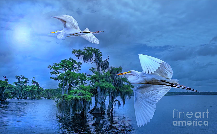 Twilight Egrets at Blue Cypress Lake. by Brian Tarr