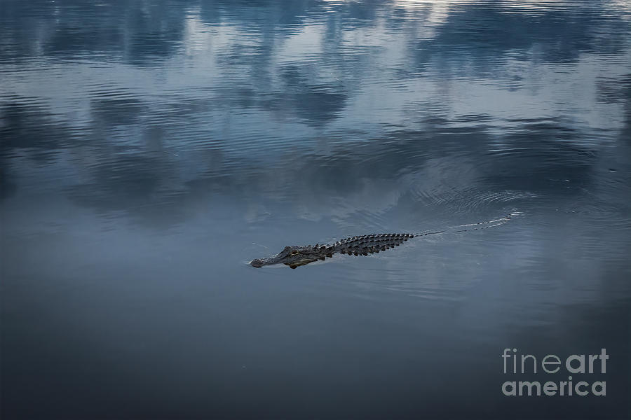Twilight Falls And Alligator Calls Photograph