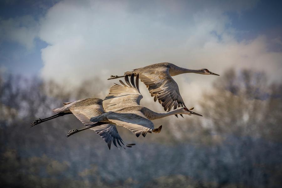 It Was Twilight And Sandhill Cranes >> Twilight Flight Photograph By Sandra Burm
