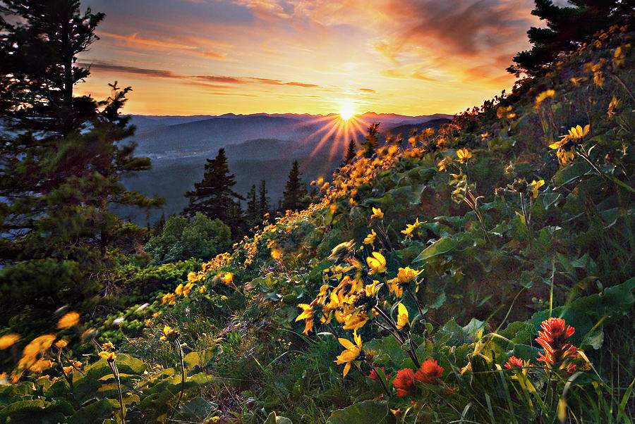 Balsamroot Photograph - Twilight Of The Balsamroot by John Christopher