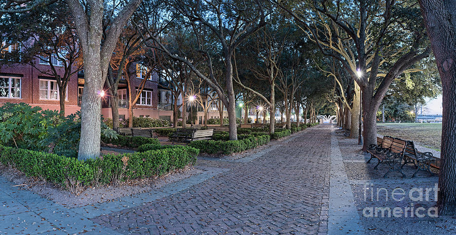Charleston Photograph - Twilight Panorama Of Charleston Waterfront Park Promenade And Shady Canopy Of Oaks - South Carolina by Silvio Ligutti