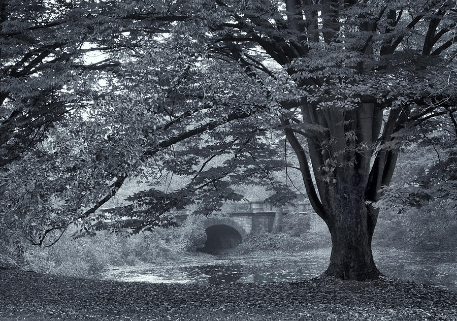 Trees Photograph - Twin Lake Mist by Jessica Jenney