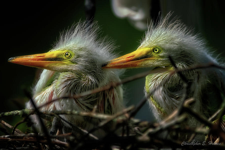 Twins Waiting by Christopher Holmes