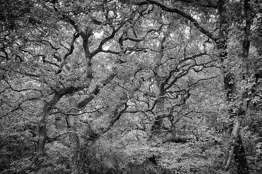Twisted Forest by Nathan Bush