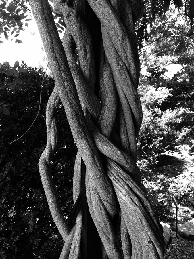 Tree Photograph - Twisted Tree by Marty Klar