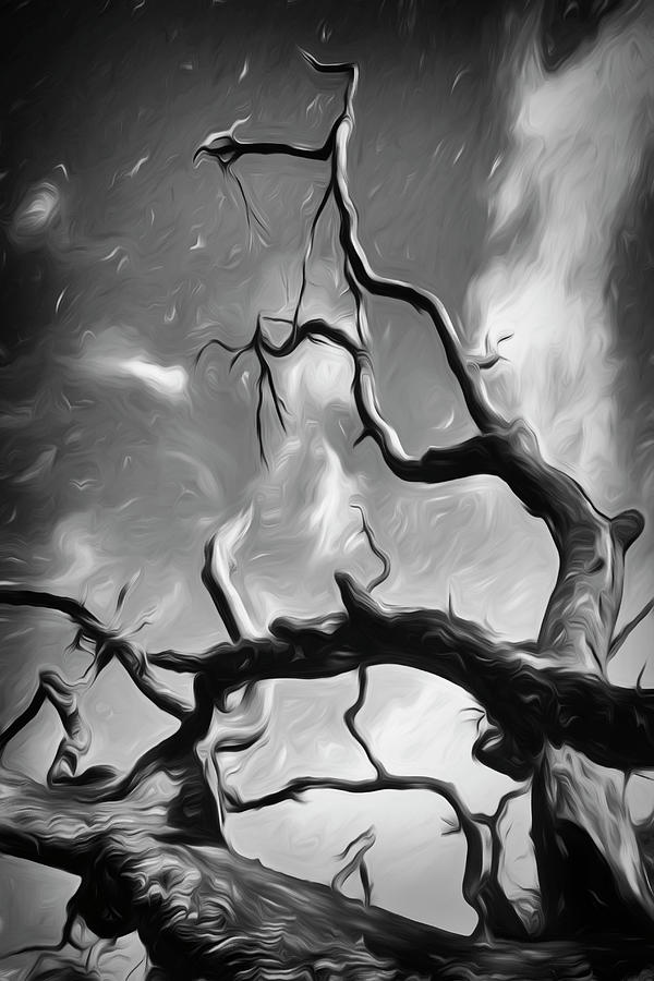 Twisty Tree Black And White Photograph
