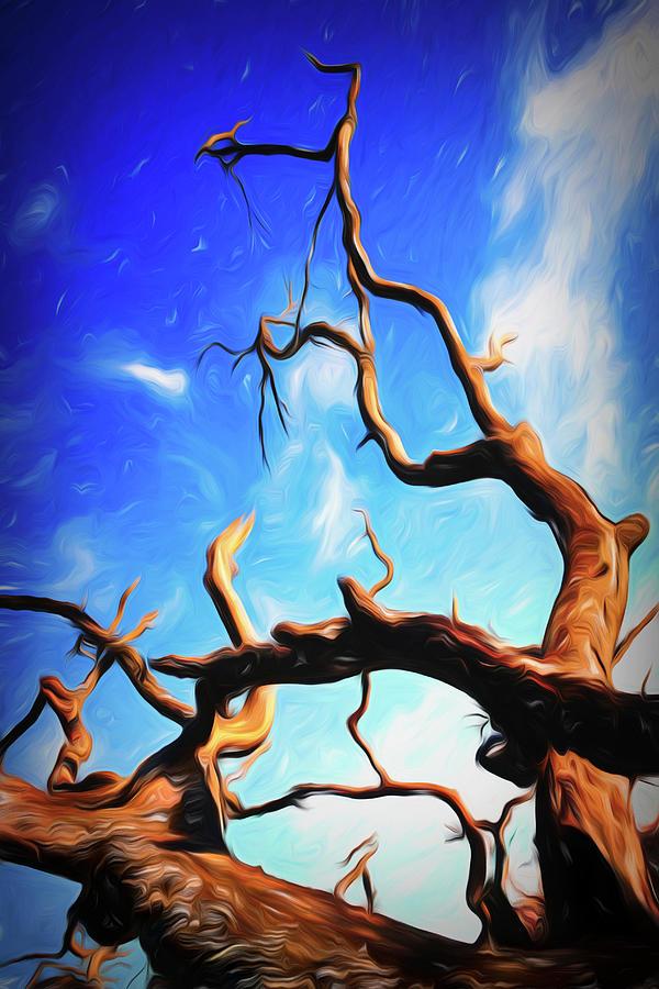 Twisty Tree Photograph