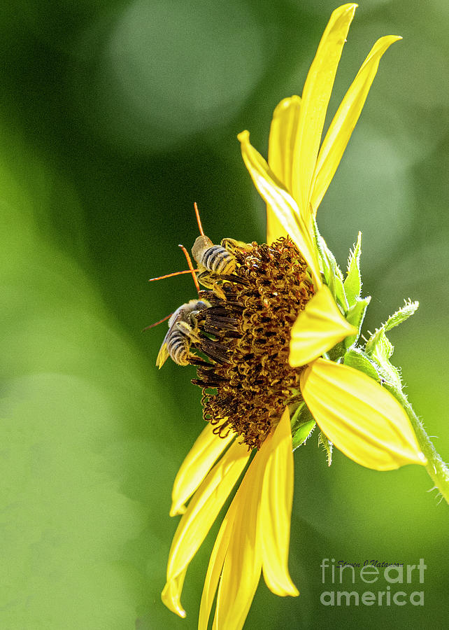 Two Bee by Steven Natanson