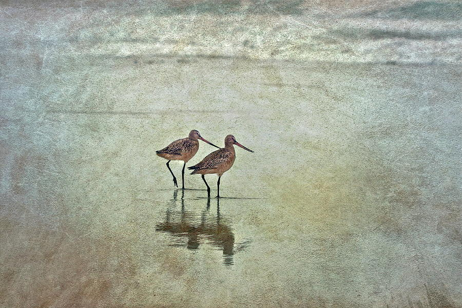 Two Birds Walking In Water Photograph by Maria Rafaela Schulze-vorberg