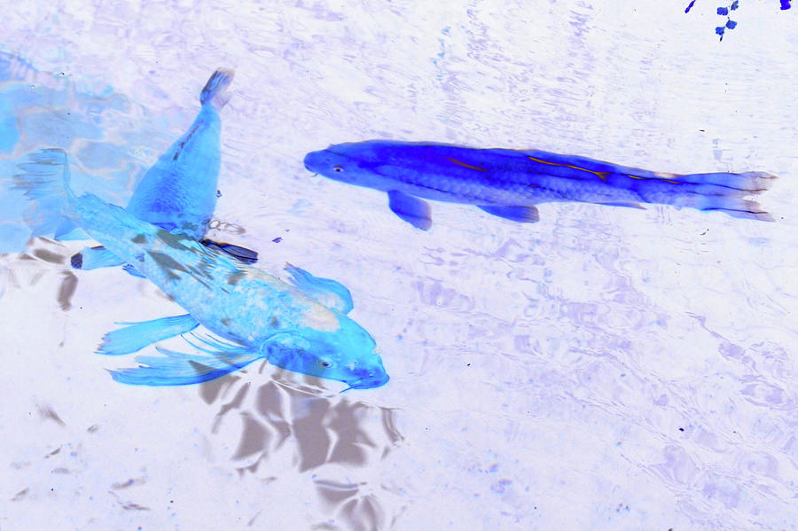 Color Digital Art - Two Blue Fish by Tom Kelly