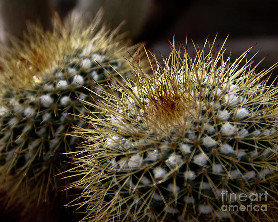 Two Cacti by James Foshee
