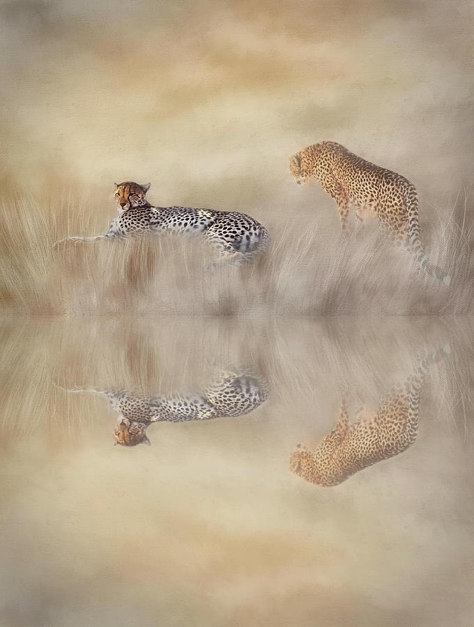 Cheetah Photograph - Two Cheetahs by Donna Kennedy