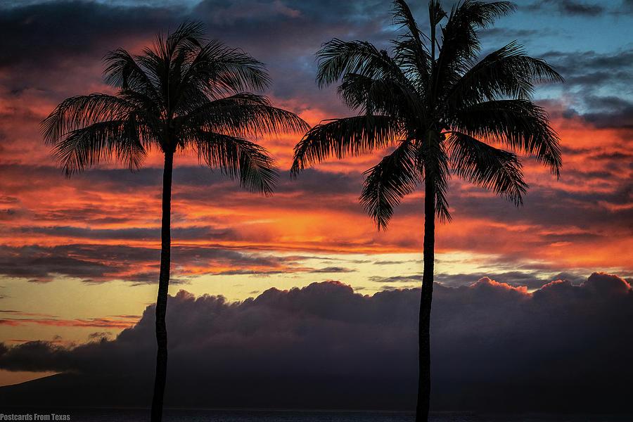 Two Coconuts by Gaylon Yancy