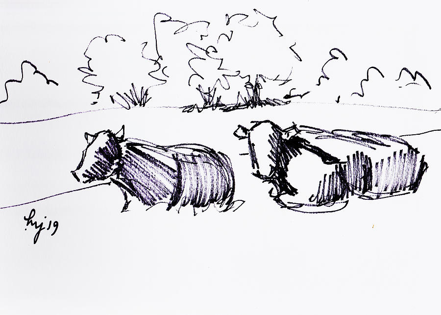 Two cows lying down drawing by Mike Jory