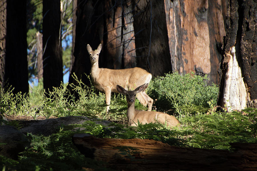 Deer Photograph - Two Deer by Carly Creley