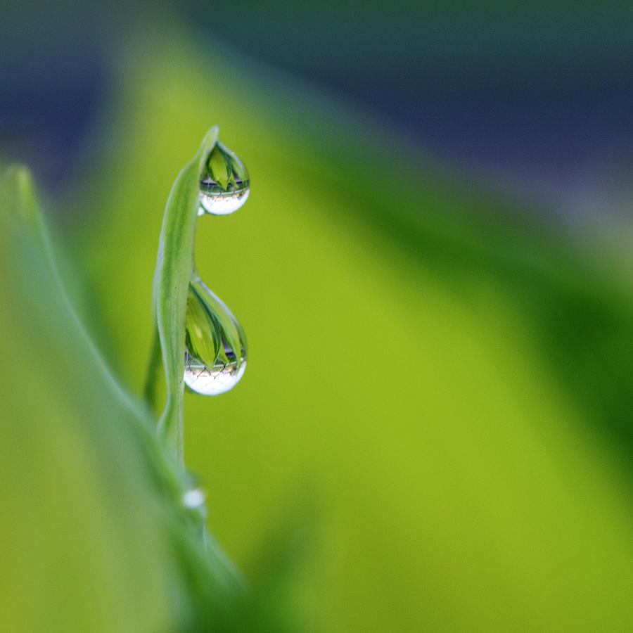 Two Drops On  Leaf Photograph by Photography By Gordana Adamovic Mladenovic