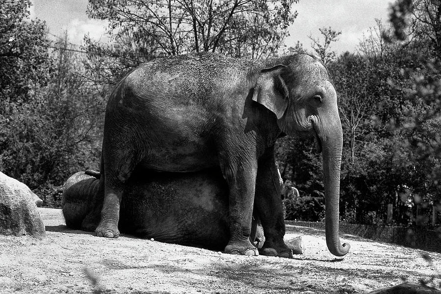 Two elephants by picturetom