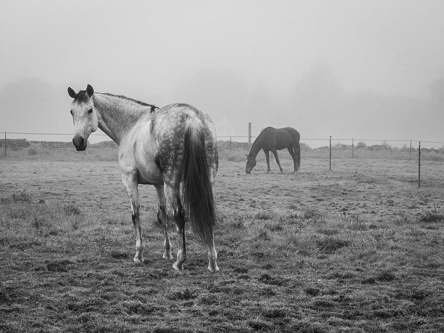 Animal Photograph - Two Horses Bw by David Gordon
