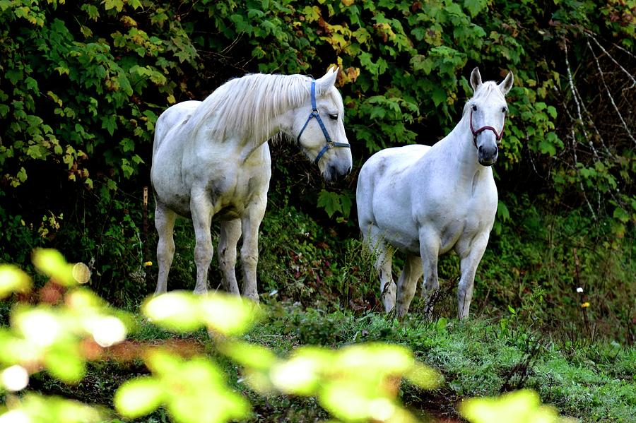 Two Horses Talking About It by Jerry Sodorff