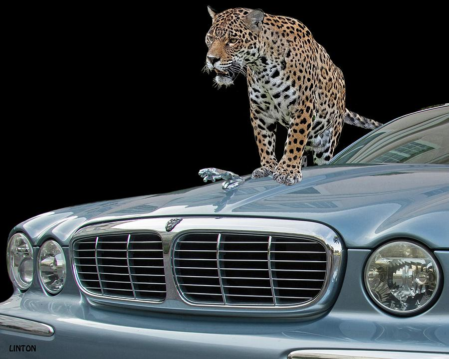 TWO JAGUARS 1 by Larry Linton