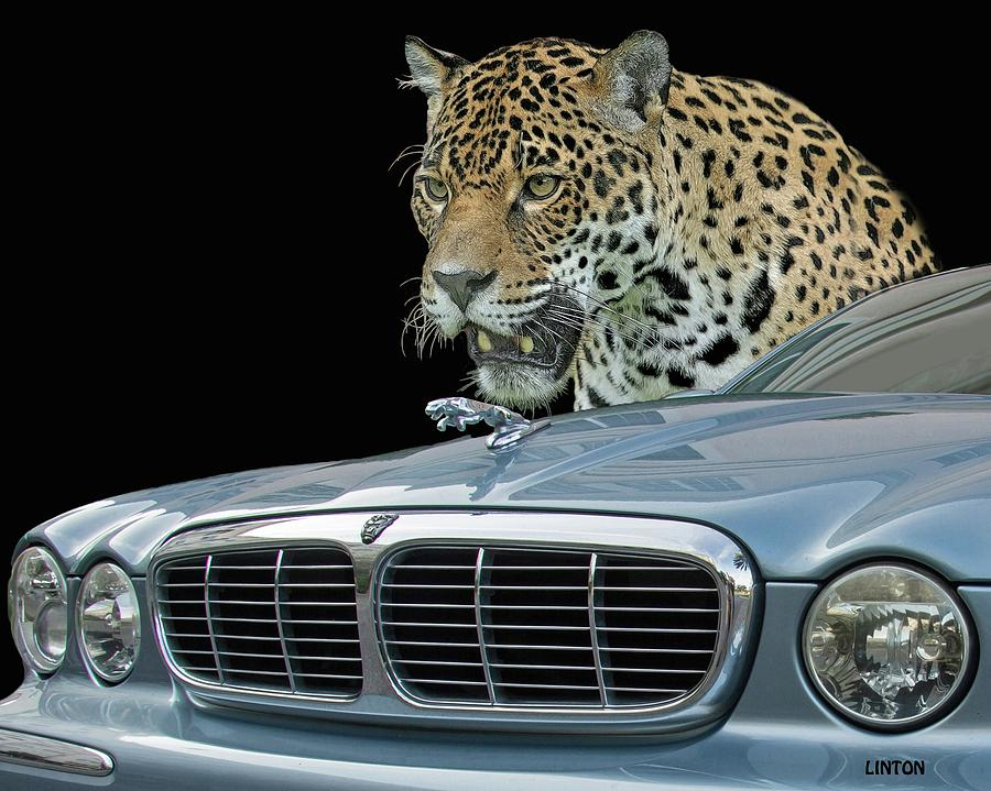 TWO JAGUARS 2 by Larry Linton