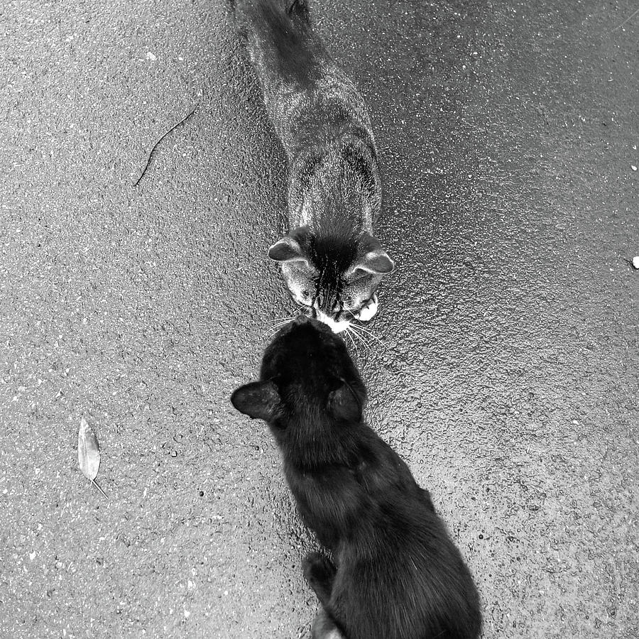 Two Kittens Which Kiss Photograph by Photographer, Loves Art, Lives In Kyoto